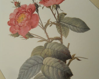 Redoute Rose Prints Self Matted in Tan Vintage Redoute Pink ose Prints Wall Decor Vintage Paper Ephemera