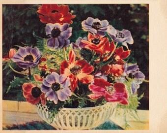 "Signed. Vintage Photo Postcard by E. Ignatovich ""Anemones"" -- 1960. Condition 9/10"