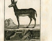 1811 Antique Print La Gazelle Tzeiran Authentic 200 Years Old Copper Engraving, Buffon