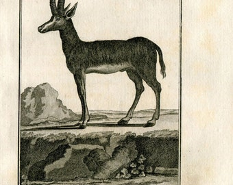 1811 Antique Print La Gazelle Tzeiran Authentic 200 Years Old Copper Engraving, Buffon