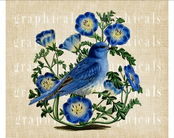 Bluebird Blue morning glory flowers instant graphic digital download image for iron on transfer to fabric pillow burlap paper No. 2246