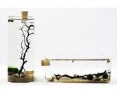 Marimo Aqua Terrarium-Rectangle Geometric Terrarium-Japanese Moss Ball Aquarium-Desktop Terrarium-Cork Stopper Glass Vase-Office Decor