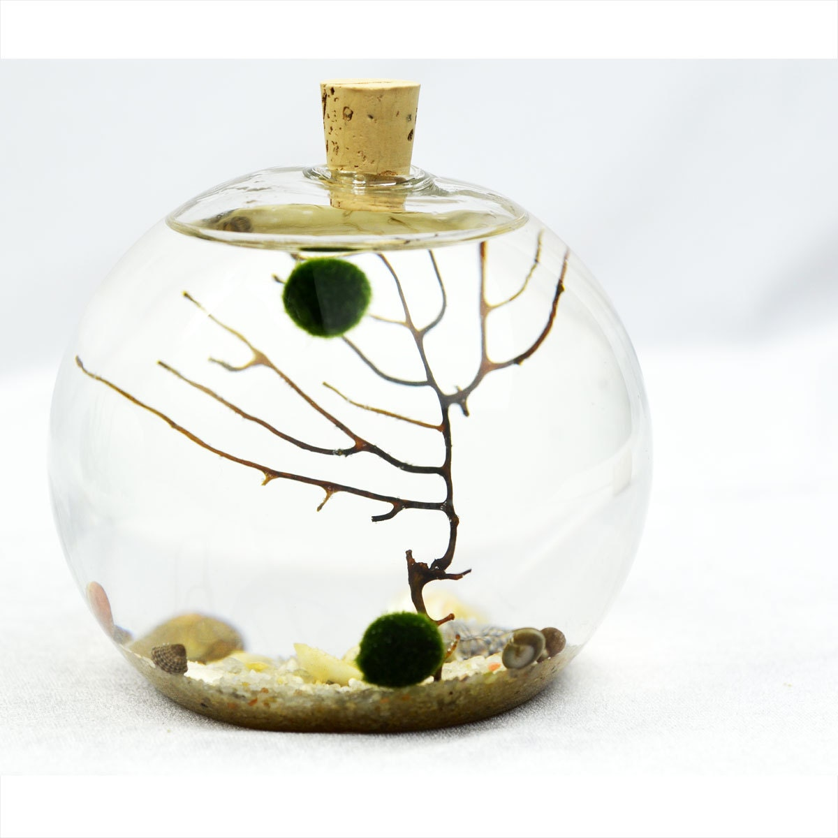 mc coy terrarium mousse japonais boule aquarium vase bulle. Black Bedroom Furniture Sets. Home Design Ideas