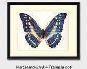 "50% SALE Morpho Butterfly Decor w/Mat (Blue Wall Art, 1960s Gift for Friend) Vintage Matted Butterfly Art --- ""Morpho Butterfly"" No. 38-1"