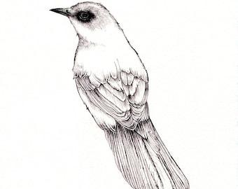 "Mockingbird Print: Digital print of an original b/w drawing available 5x7"" or 8x10"""