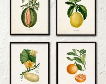 French Botanical Print Set No. 12 - Giclee Canvas Prints - Kitchen Art - Antique Botanicals - Prints and Posters - Fruit Prints - Wall Art