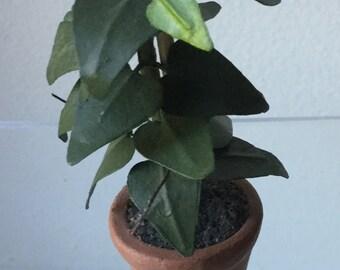 """Dollhouse Miniature Plant 1"""" Scale  (JQ)"""