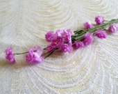 Vintage Baby's Breath Flower Spray Dark Mauve Pink NOS for Weddings Hair Clips Bouquet Corsage Tiny Blossoms Gypsophila 1FV0004M