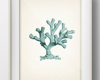 Blue Coral 4- SH-03 - Fine art print of a vintage natural history antique illustration,
