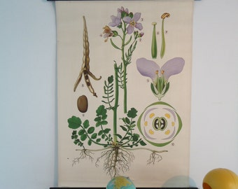 Botanical antique chart, Vintage pull down chart from Austria