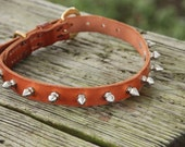 Spike Dog Collar - Medium
