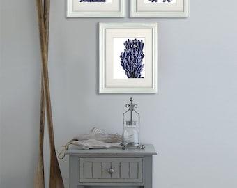 Coral prints Set 3 prints blue coral 1 sea coral illustration nautical print sea coral art print sea coral décor Bathroom wall art ocean art