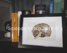 Anatomical Brain Cross Stitch- Handmade and Framed! Great for display or gift!