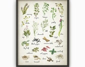 Herbs and Spices Watercolor Kitchen Wall Art Poster - Rustic Kitchen Print - Garden Plants Conservatory Decor - Gift Idea for Her (B242)