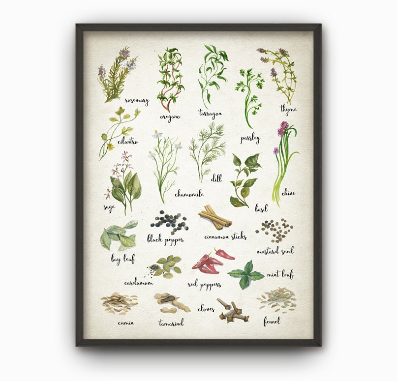 Kitchen Art Herbs: Herbs And Spices Watercolor Kitchen Wall Art Poster Rustic