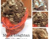 MANX LOAGHTAN 1kg whole PEDIGREE fleece Rare Breed British wool. Amazing fleece gets even better washed!