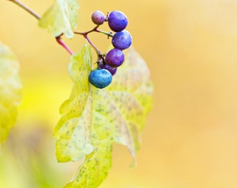 """Discounted 8x10"""" fall photo print - autumn, yellow leaves, porcelain berries, inventory sale"""