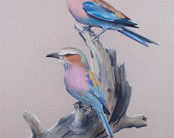 BIRD LOVERS ARTWORK Realistic Lilac Breasted Rollers Chalk Pastel Drawing purple pink blue Nature wall art tree stump feathers Africa