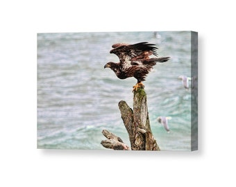 Eagle Art,Nature Wall Art, Bald Eagle, Bird Wall Art, Bird Photography,  Raptors, Nature Photography, Ocean Canvas Art, Beach Decor,Seagulls