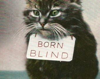 Vintage real photo postcard cute kitten cat Born Blind digital download printable instant image