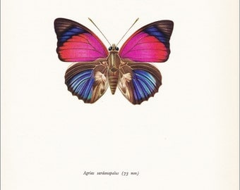 vintage butterfly pink wings winged insect art print blue pink Agrias Sardanapalus home decor 8x10 inches