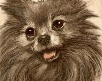 "Fred Sauter ""Pomeranian"" Early Dog Postcard"