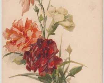 Postcard Artist C. Klein, Lovely Spray Of Carnations W Buds, Unused