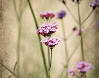 Nature Photography, Flower Photography, botanical print, dreamy, fine art, pink, green, purple, cream, sage green, wall art, home decor