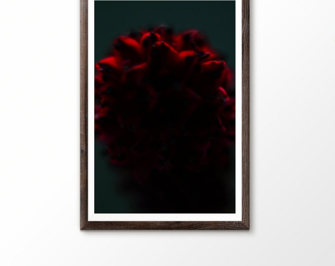 Macro flower photo Photography print flower Instant download Nature photograph Digital wall art Nursery Decor Red flower Bokeh Spring Grass
