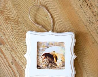 Seasnail ~ Christmas, Ornament, Gift, Artwork, Coastal, Home, Decor, Beach, Photography, Joules, Nautical, Mini Frame, Seaside, Wall Art