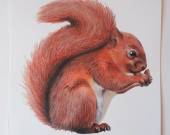 Squirrel Illustration Giclee Print, A4