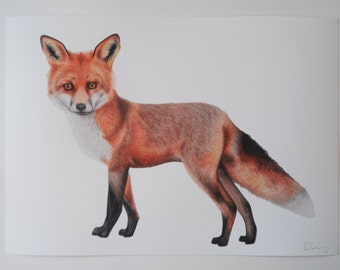 Fox Illustration Giclee Print, A4