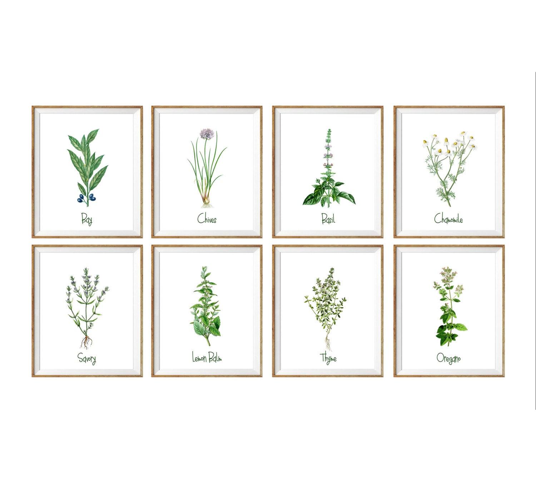 Kitchen Art Herbs: Kitchen Illustration Art Print SET Of 8. Herbs By