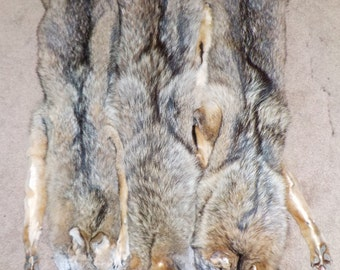 Tanned COYOTES with Feet!