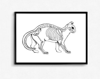 Black and White Cat Anatomy Art Print - Cat Skeleton Poster - Cat Wall Art - Ink Drawing / Anatomy Wall Art, Cat lover gift, Veterinary gift