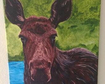 Minnesota moose N1
