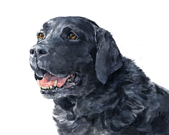 Black Lab Watercolor Limited Edition Print Labrador Retriever