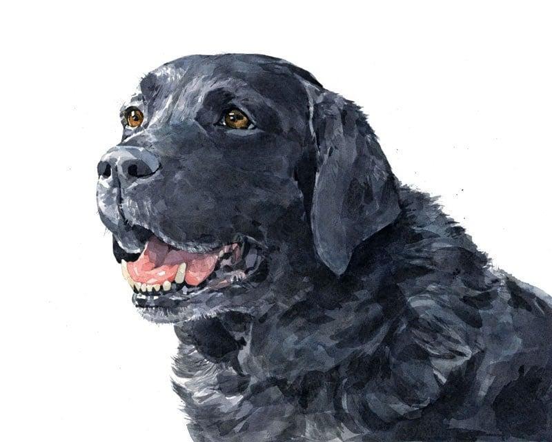 Black Lab Watercolor Limited Edition Print Labrador Retriever