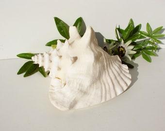 Large vintage natural sea shell