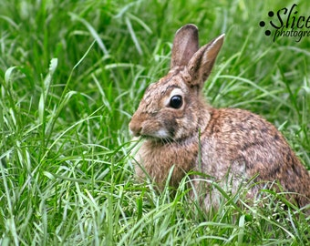 Bunny, Rabbit, Nature Photography, Spring Photography