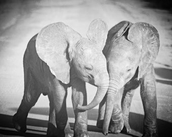 Kenya Photography - Kenya Safari - Elephant - Baby Elephant - Nursery Art - Baby gift - Playful print - Black & White - Wall Art - Decor