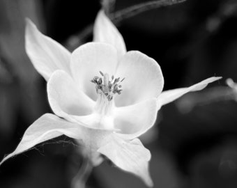 Floral Photograph, digital photography print, black and white, photography, flowers, summer,