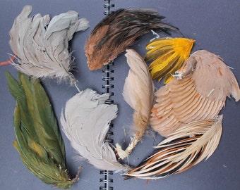 8 Vintage Feather pieces REF 315