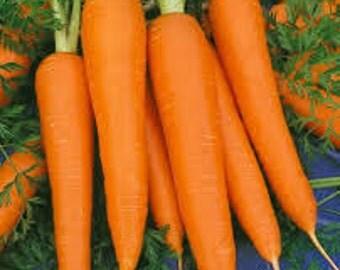 Chantenay Carrot Seeds, Daucus carota var. sativus, Best Rated Of All The Carrots, Heirloom, Organic, Open Pollinated
