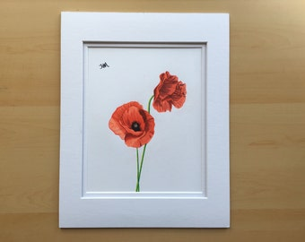 Poppy flower drawing, wall art flower drawing, original pencil drawing, colored pencil drawing, 11x14 drawing, housewarming gift