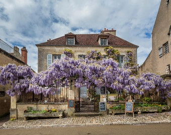 France Photography, Restaurant in Vezelay, Burgundy, Rural France, Architecture, Gallery Wall Art, Fine Art Print, French Style, Wisteria