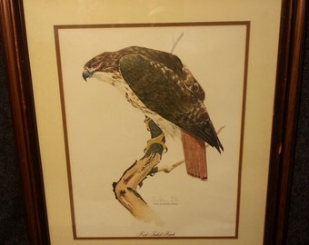 Red Tailed Hawk Print signed by Tom Dunnington