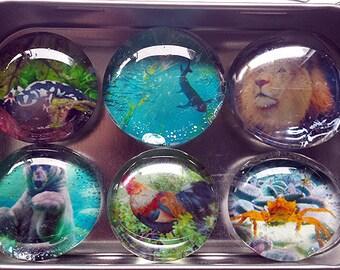 Handmade Glass Marble Magnets - original photographs of Animals