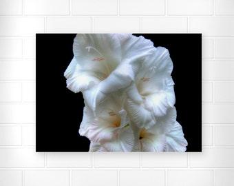 White Gladiolus - Flower Photograph - Wall Art Print - Fine Art Print - Floral Print - Still Life Wall Art - Home Decor - Nature Photography