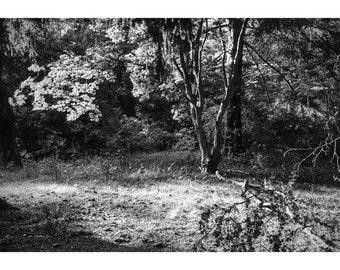 Noir Forest